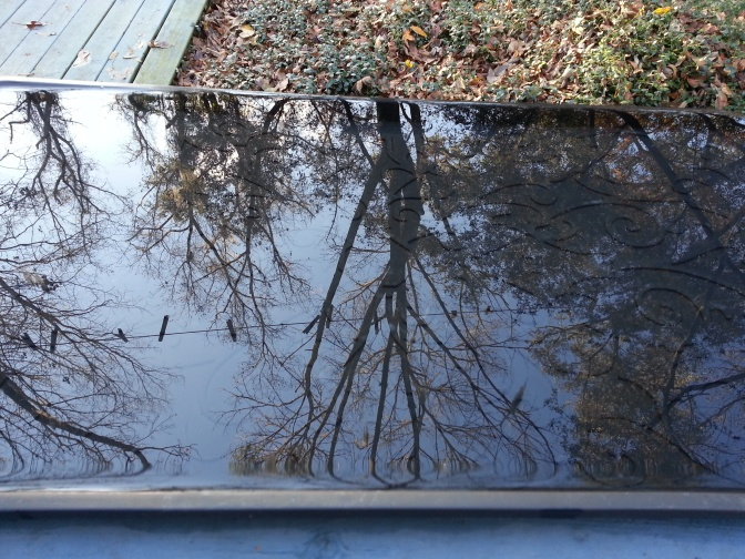 After 12 hours of rainfall and cloud cover, sunlight allowed a view of our yard to reflect on the mirrored surface of this tray filled with rain water.