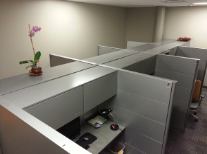 "Eight cubicles all to myself because the ""fellows"" (interns) have left for the holiday."