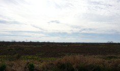 A view of Paynes Prairie.
