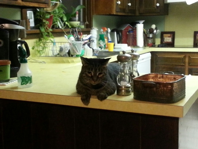 Our well-named cat Trouble caught by my camera. Does she know  she's not supposed to be on the counter? Maybe. But to her, breaking the rule is far better when she can tower over her nemesis, Tori.  Read her story at https://saradagen.com/tag/cat-trouble/.