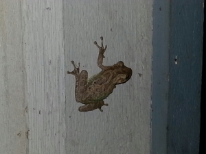 frog1