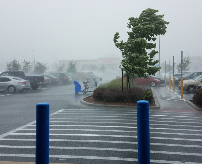 walmart in the wind