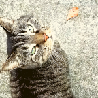 I've Lost Her: One Cat Who Stops Cars and Steals Hearts